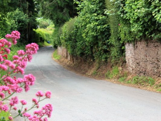 A country lane with pink flowers