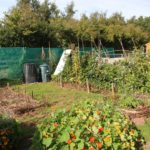 Vegetable plots on the village allotments