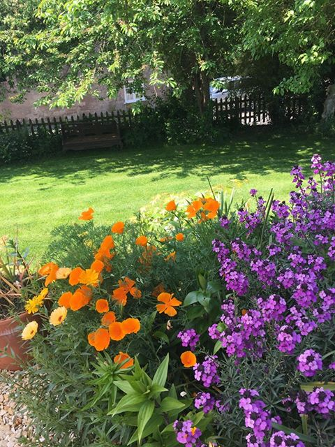 Orange and purple flowers and a lawn