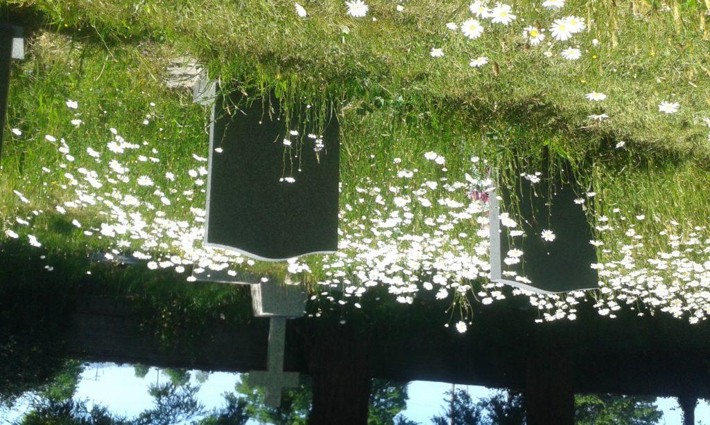 Gravestones and daisies