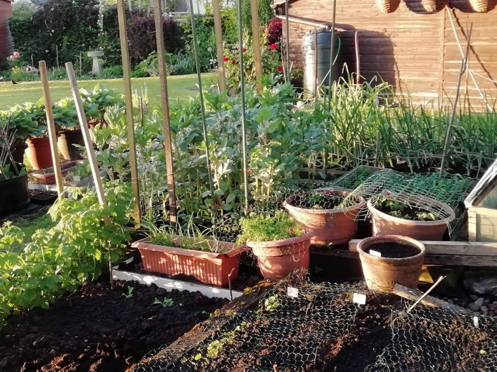 Vegetables growing up stakes