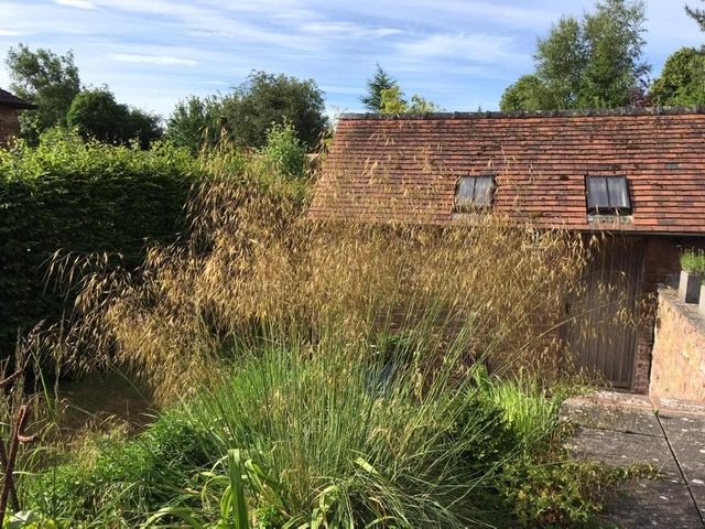 Ornamental grasses with a building behind