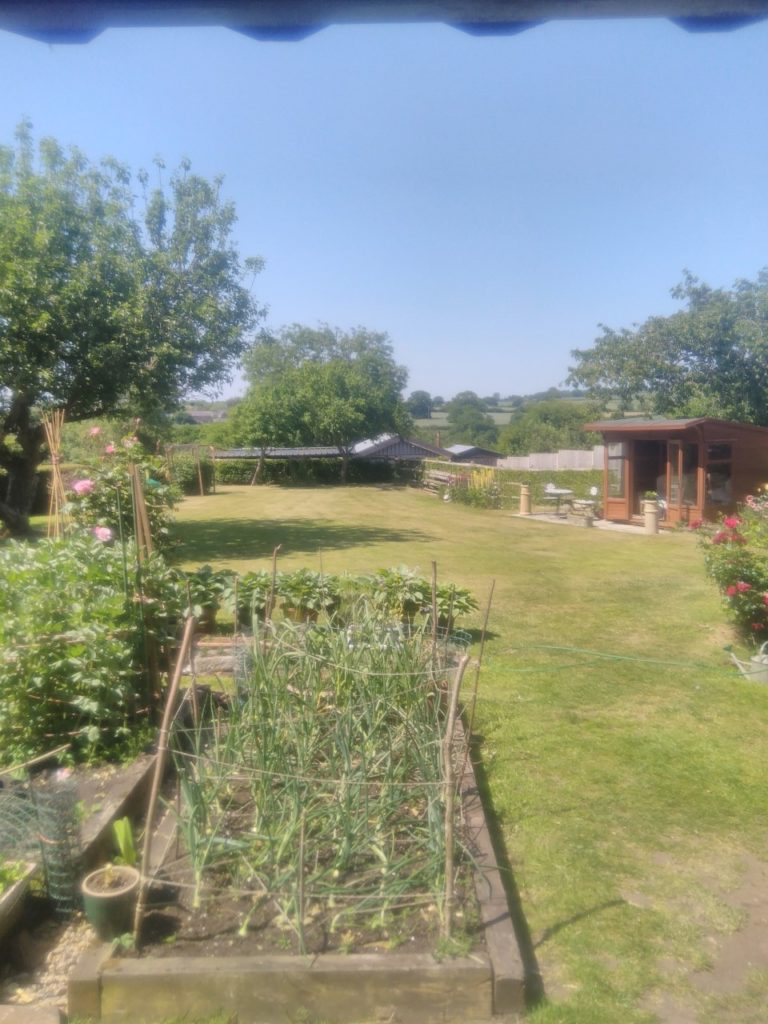 Vegetable patch, lawn and summerhouse