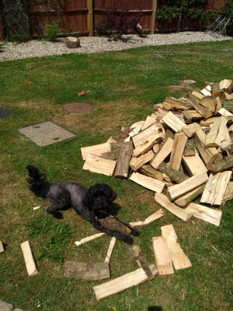 black dog and a pile of logs in a garden