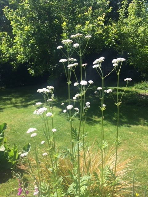 White flowers in a garden