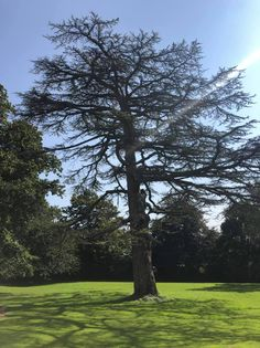 A tree in the middle of a lawn